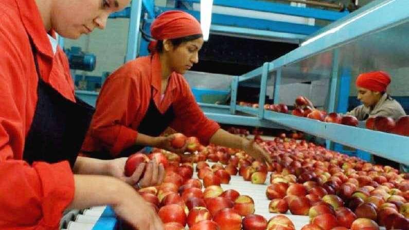 De la mano de Fecovita, fruticultores  buscan exportar pulpa y jugos a USA
