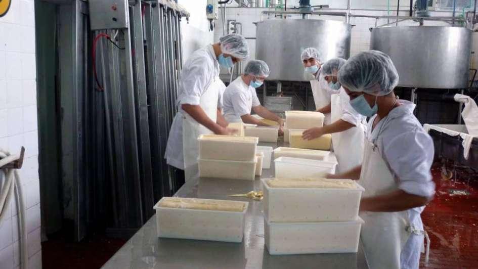 Logran reducir la sal en el queso tybo sin que pierda sus cualidades