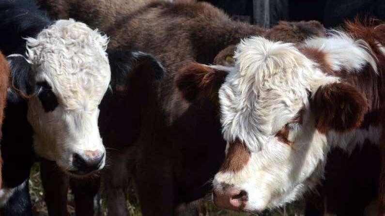 Aumenta el consumo de carne en Mendoza y tracciona al sector rural