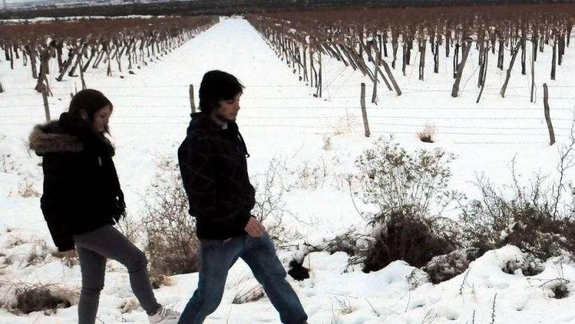 La temperatura en el viñedo, un tema clave