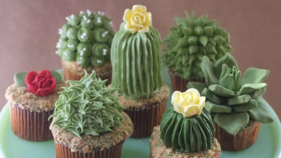 Plantas Para Perezosos, Especies Que Necesitan Pocos Cuidados
