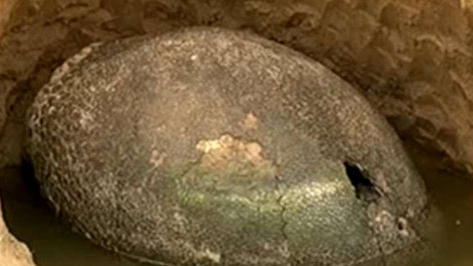 Buenos Aires: encontraron un caparazón que podría ser de un gliptodonte de 10 mil años