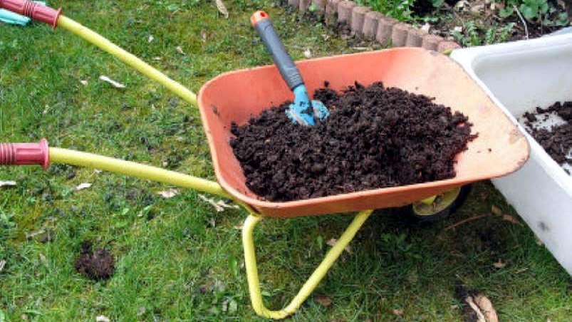 Perlas cultivadas: consejos de jardinería