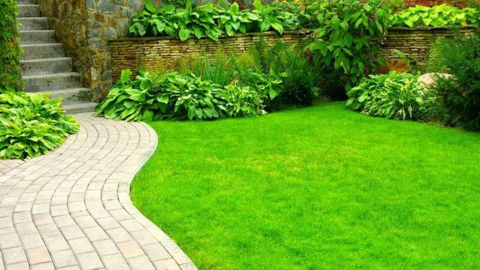 Tips para mantener tu c sped siempre verde for Hongos en el cesped jardin