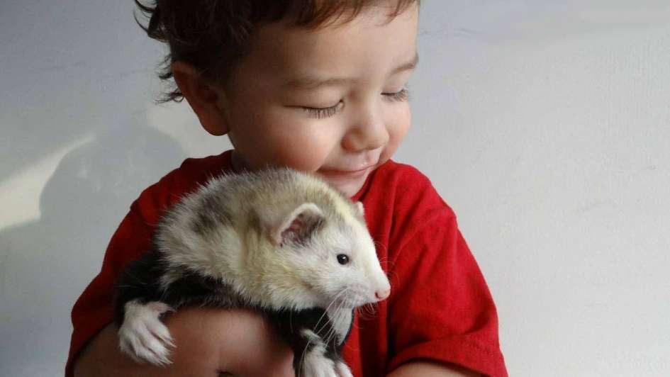 Animales exóticos en casa:  ¿Sí o no?