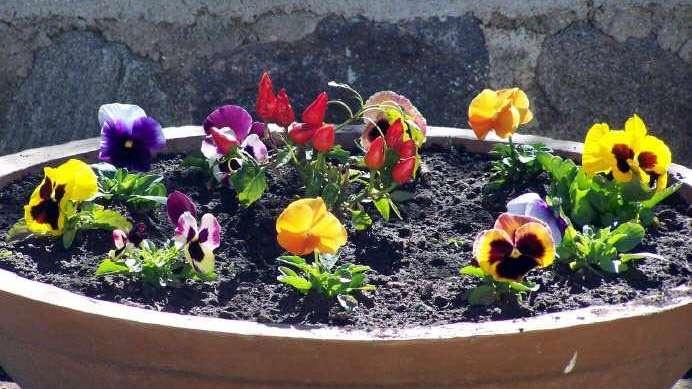 Plantas: jardín de cambio de temporada