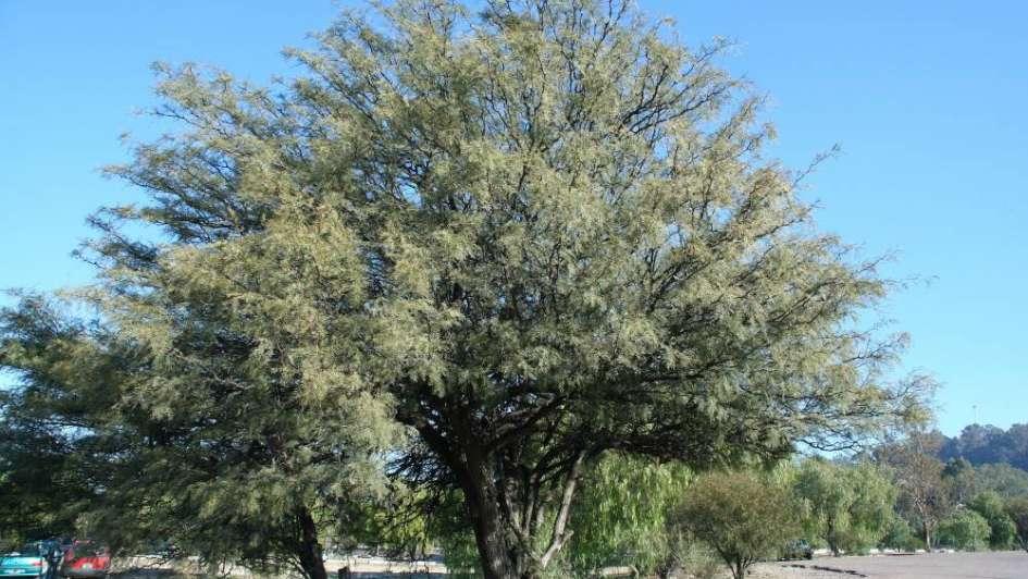 Por qué se festeja hoy el Día del Árbol en Argentina