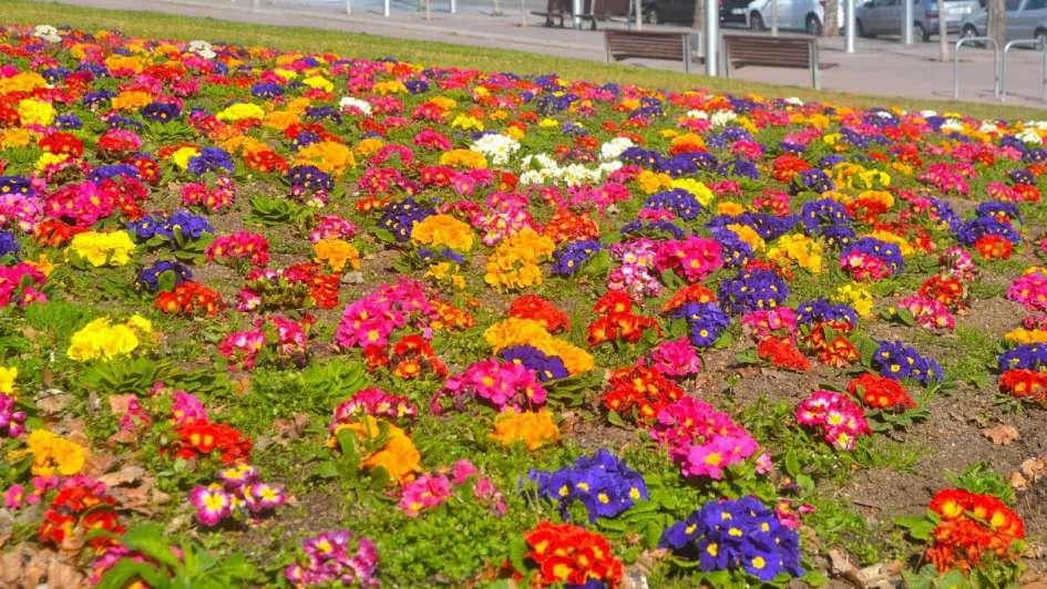 En Esta Nota Algunas De Las Plantas De Flores Ideales Para Trasplantar En Epoca Invernal