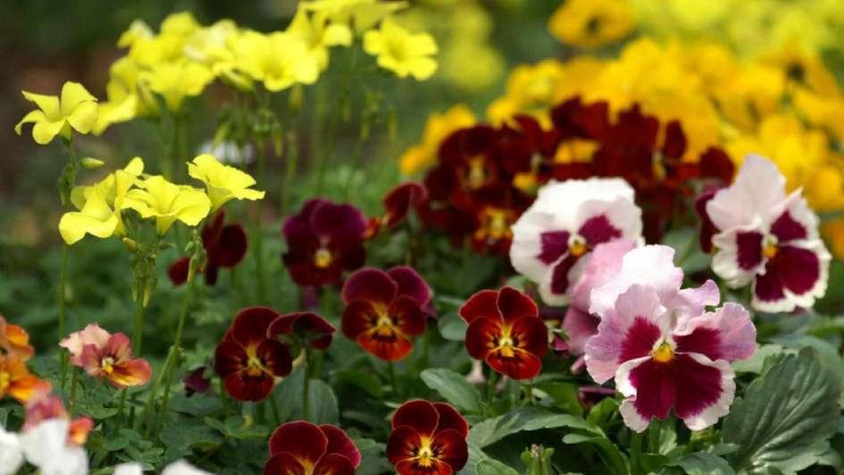 C mo tener tu jard n verde y florido durante el invierno for Ver imagenes de jardines de invierno