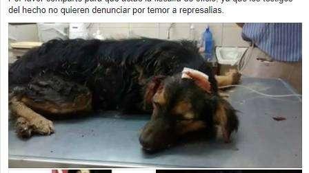 Un hombre golpeó a ladrillazos a un perro y luego lo enterró vivo