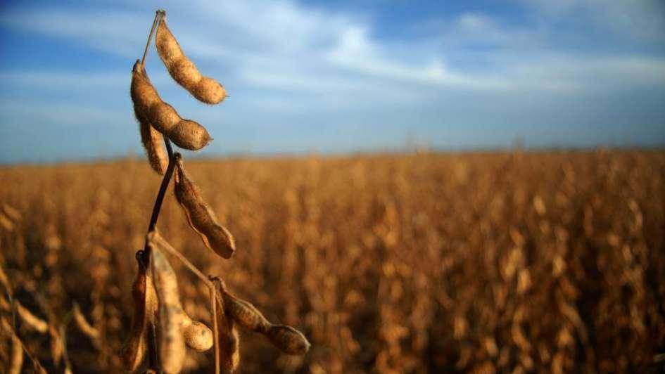 Crecen las exportaciones de soja por la recuperación económica global