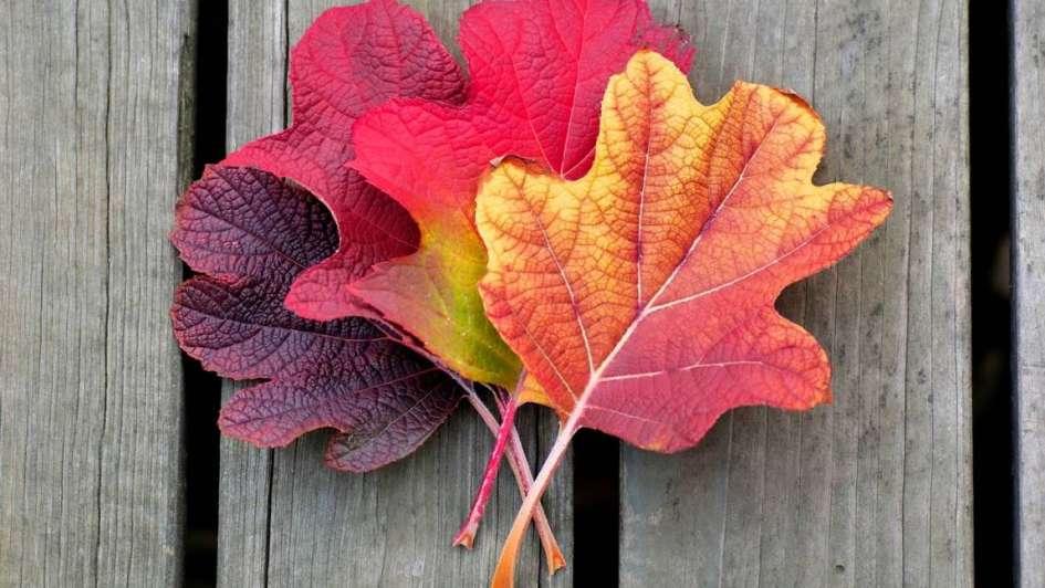 Hojas de oto o para decorar tu casa - Decorar hojas de otono ...