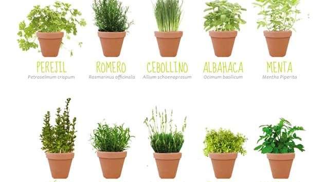 Las plantas arom ticas que perfuman mejor nuestro hogar - Plantas aromaticas interior ...