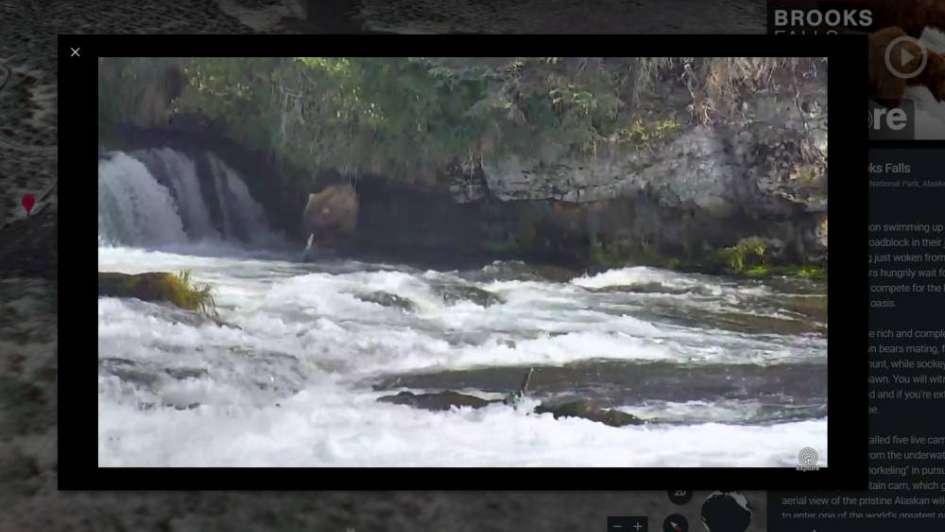 Google Earth ahora tiene cámaras en directo para ver la naturaleza alrededor del planeta
