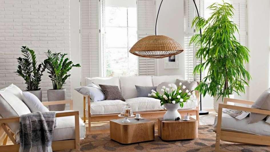 plantas de interiores más resistentes