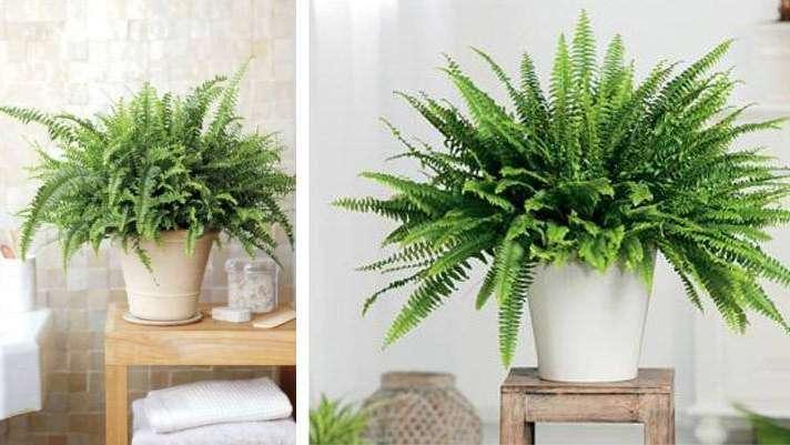 Las plantas de interiores m s resistentes for Cuales son las plantas para interiores