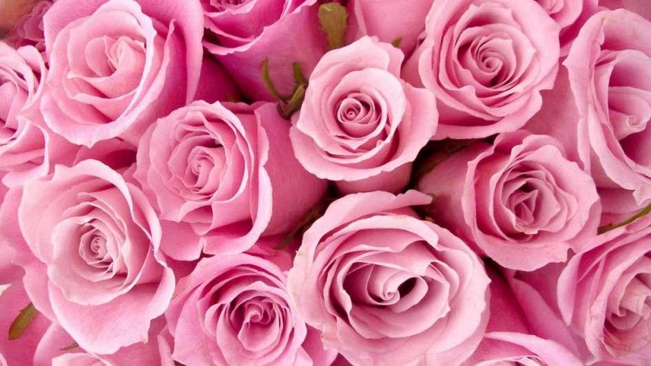 Flores Preservadas Por Siempre Bellas