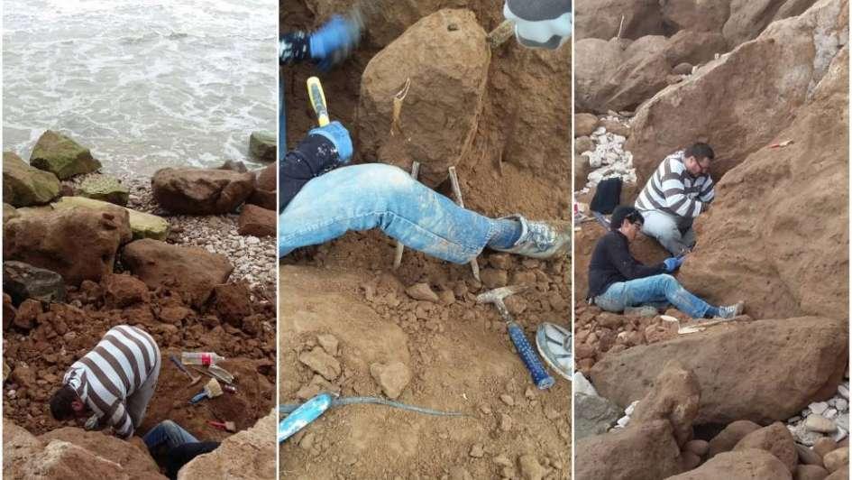 Encontraron en Mar del Plata restos fósiles de temibles aves carnívoras