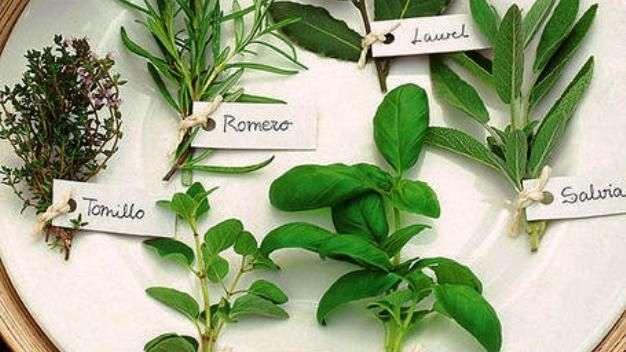 C mo hacer un huerto de plantas arom ticas y medicinales - Plantas de interior aromaticas ...