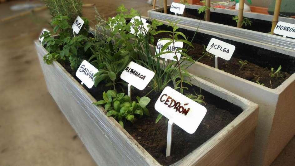 Cinco pasos para lograr una huerta en una maceta for Huerta de aromaticas en macetas