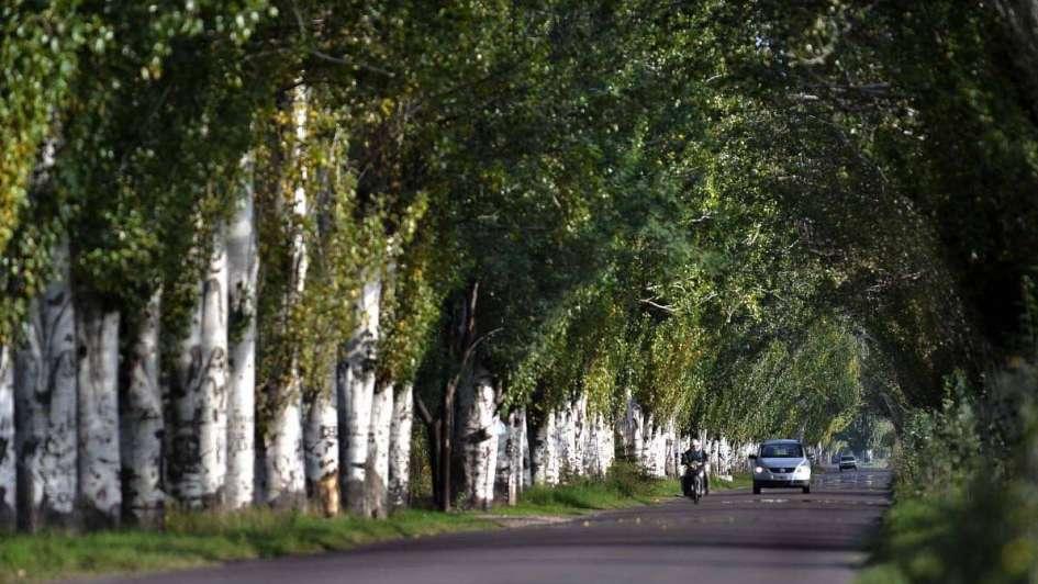 Oportunidad para los árboles