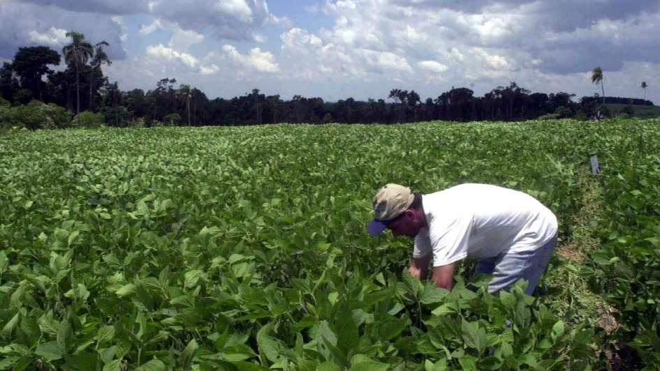 Cosecha: esperan un incremento del área sembrada en la Pampa Húmeda