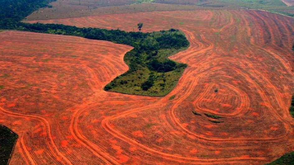 Argentina dice que en 4 años habrá cero deforestación