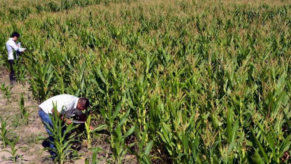 México compraría más maíz a la Argentina