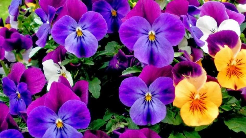 Las Flores Mas Lindas Para La Primavera