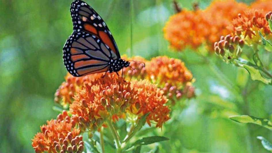 un maravilloso jard n de mariposas