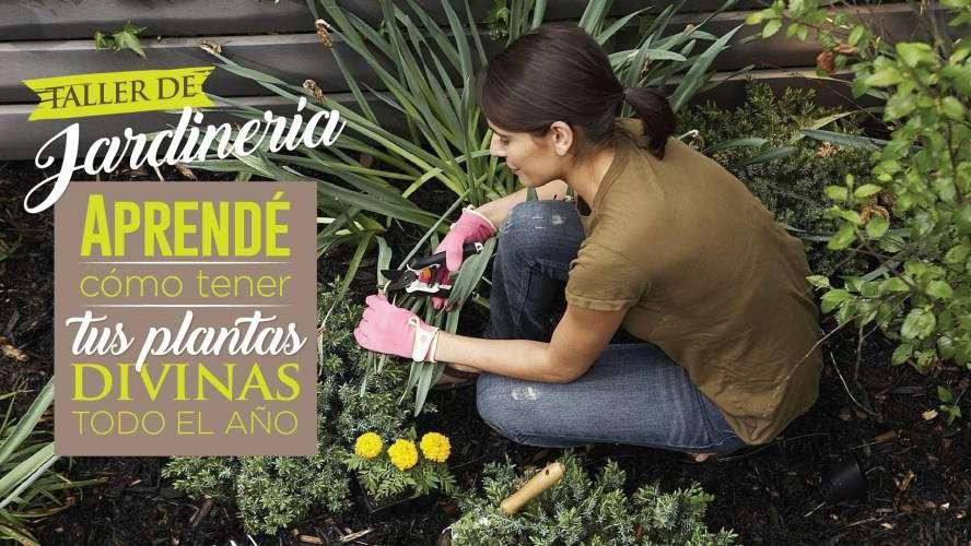 Ltimas vacantes para el taller de jardiner a for Como aprender jardineria