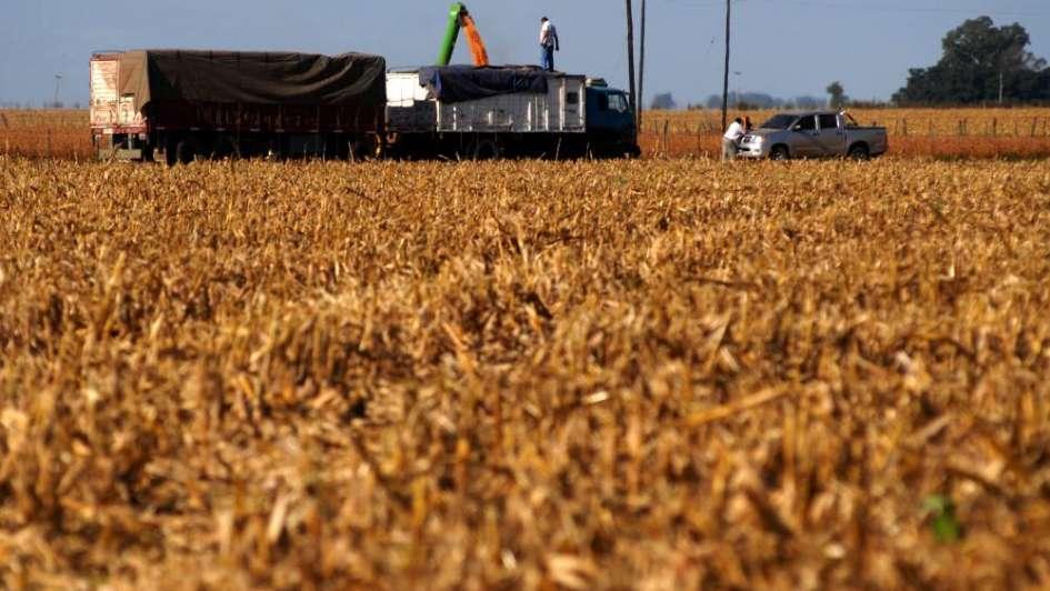 Seguros y emergencia agropecuaria ante los desastres climáticos