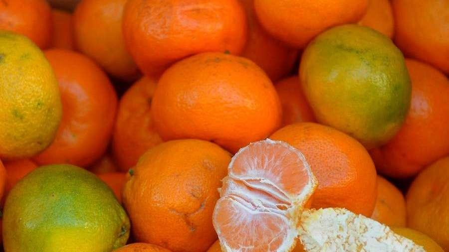 Ofrecen cosecha gratuita de cítricos durante el invierno mendocino