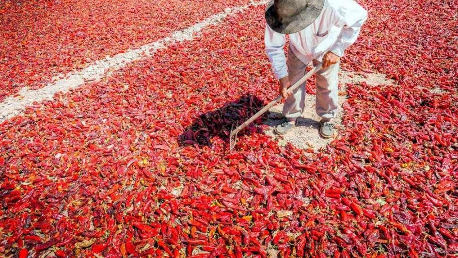 Cachi: Mantos de pimientos rojos bajo el sol