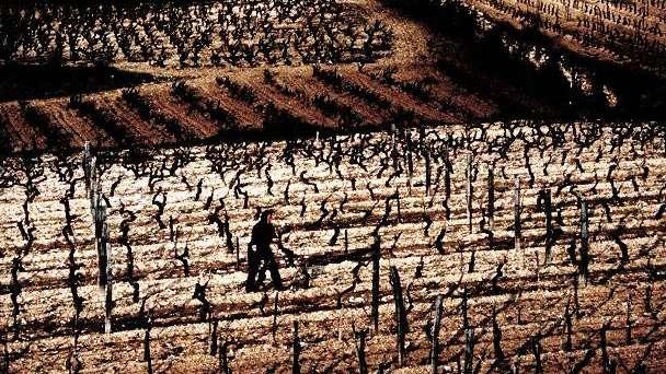 Vitivinicultores de todo el mundo claman por unidad frente al cambio climático