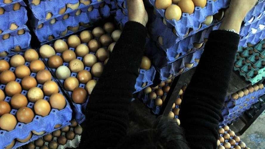 Avicultura: se tonifica la comercialización de huevos