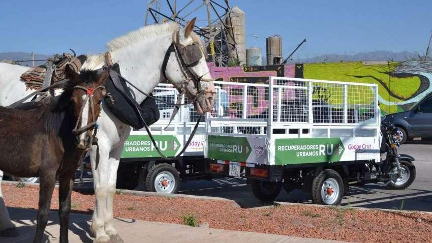 Alertan por cuatreros que roban y faenan caballos en Mendoza