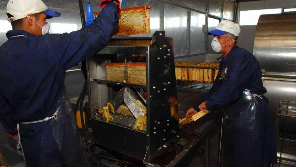 El gobierno de Mendoza decretó la emergencia apícola para toda la provincia