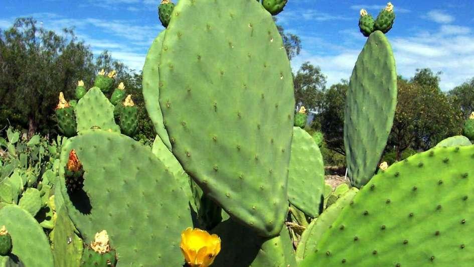 Resultado de imagen para cactus