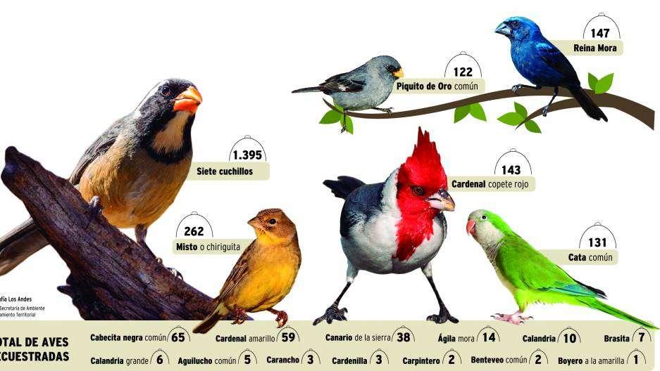 Detectan la venta de aves silvestres por Facebook