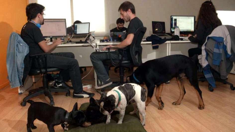 Resultado de imagen para mascotas en la oficina