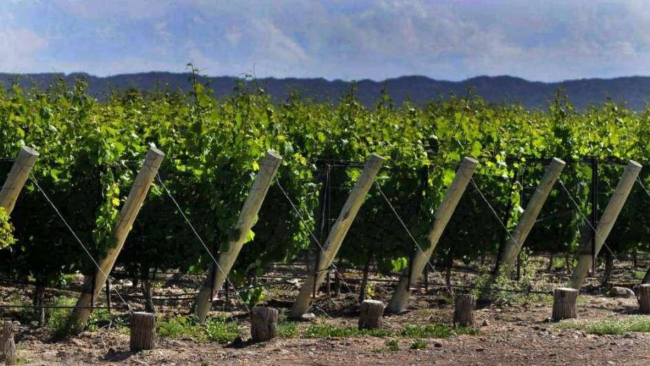 El INV quiere que se usen uvas tintas para elaborar el vino tinto económico