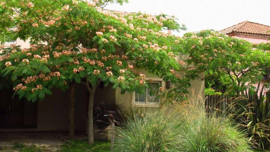 Los rboles ideales para tu jard n for Arboles para jardin