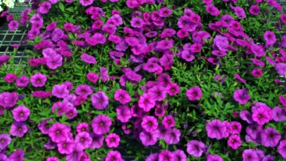 las ventas mayoristas de plantas ornamentales siguen en baja