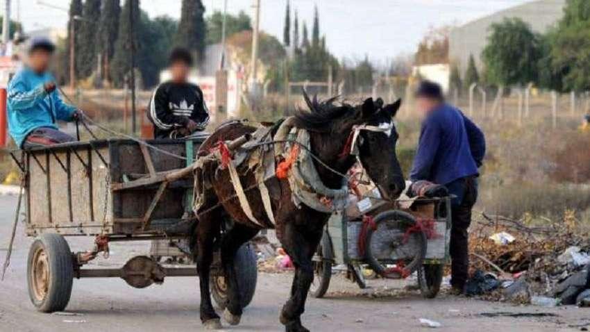 Faena clandestina: se robaron 15 caballos en una semana en la zona pedemontana