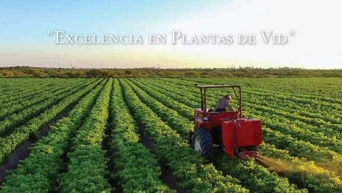 Vivero San Nicolás, dedicado a la producción de plantas de vid