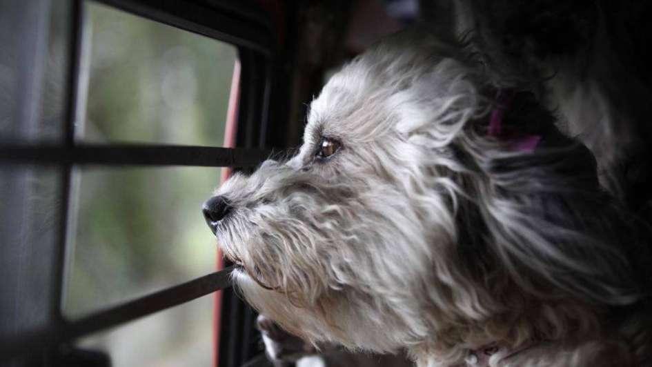 Dos casos de secuestros de perros en Guaymallén