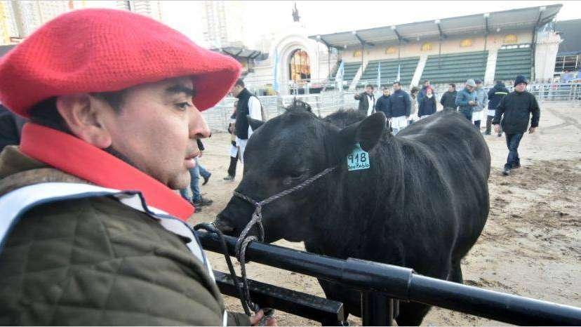 Ingresó el primer toro al predio de Palermo y hay expectativa por la 131 Exposición Rural