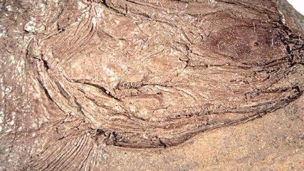Hallaron restos fósiles de un pez de más de 240 millones de años en Potrerillos