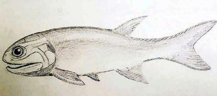 Un pez de 240 millones de años en Mendoza